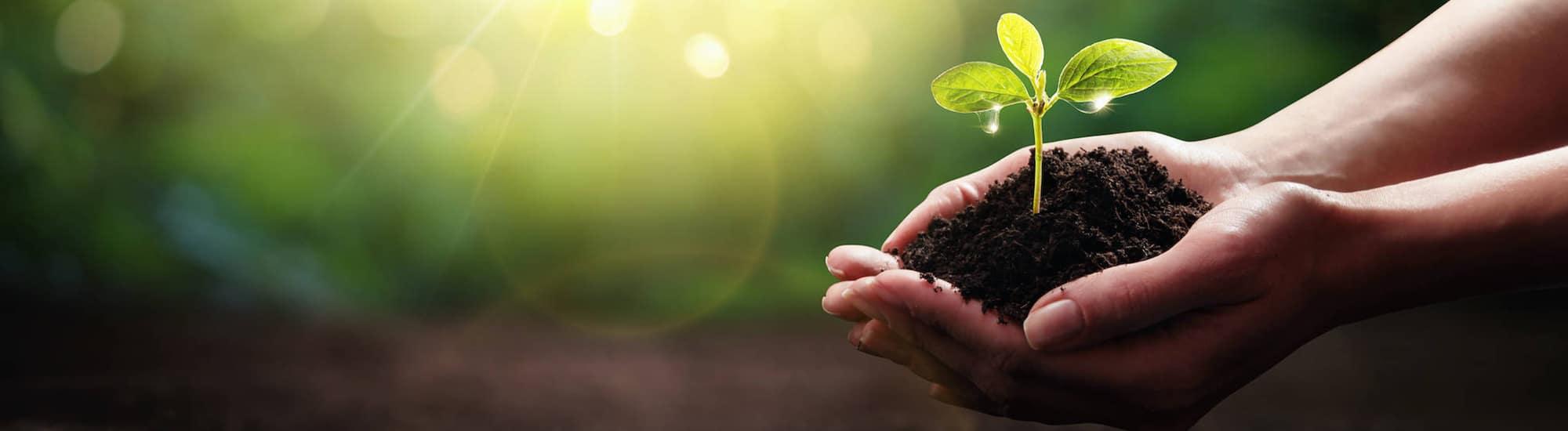 Pflanze in den Haenden